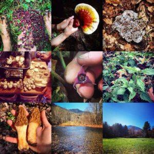 mushrooms foraging