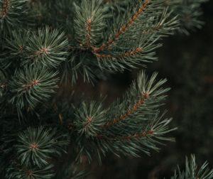 sustainable holiday season Onedey